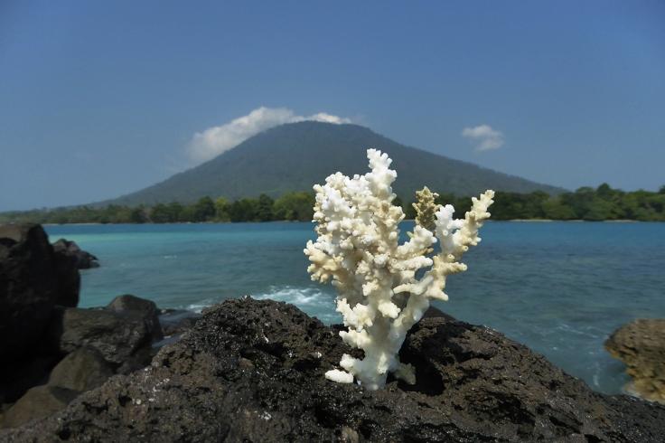 Krakatau_41